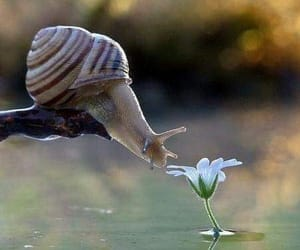 flower, nature, and snail image