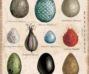 creatures, dragons, and eggs image
