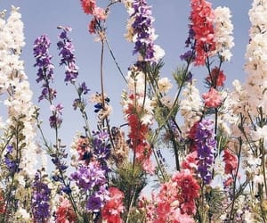 flowers, aesthetic, and background image