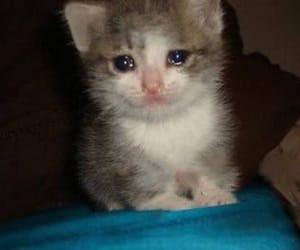cat, sad, and crying image