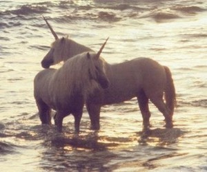 sea, unicorn, and white image