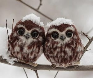 owl, animal, and winter image