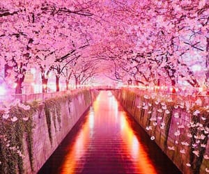 cherry blossoms, flowers, and lights image