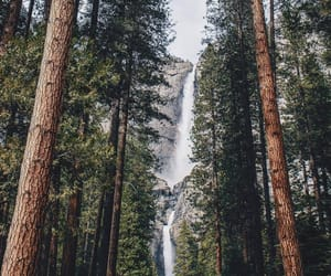 trees and nature image