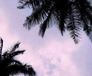 colors, sunset, and palm trees image
