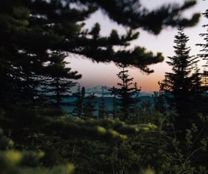 forest, sunset, and woods image