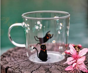 cat, cute, and glass image