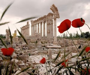 flowers, travel, and ruin image