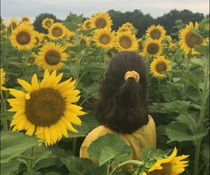 aesthetic, scrunchie, and sunflower image