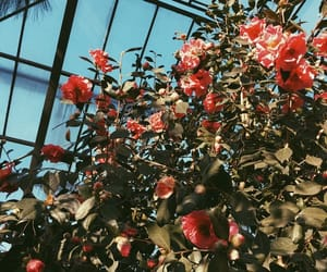 blue, botanical garden, and cologne image