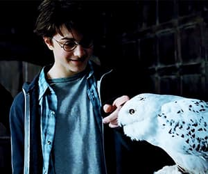 daniel radcliffe, gif, and harry potter image