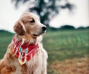 analog, dog, and photography image