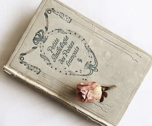 book, rose, and french image