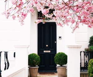 flowers, house, and london image