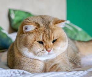 cat, sad, and cute image