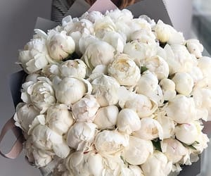 beautiful, peonies, and white image