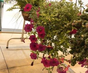natureza and florir image