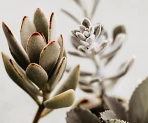 aesthetics, cactus, and flowers image