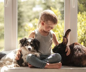 child, tiere, and dog image