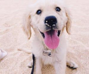 beach, cupid, and dog image