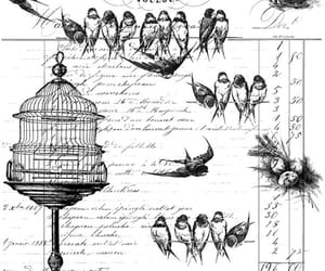 birds and draw image
