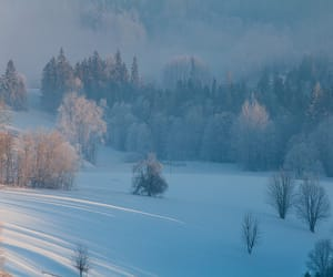 fog, landscape, and mist image