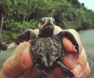 animal, turtle, and beach image
