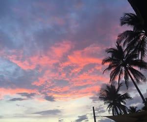 beach, palms, and peace image