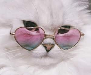 cat, glasses, and sunglasses image