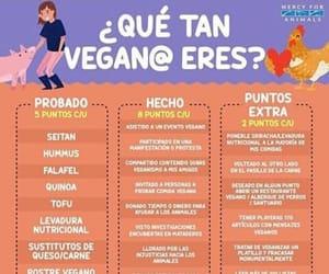 vegan, vegana, and veganism image