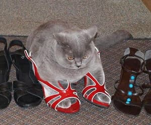 cat, funny, and shoes image