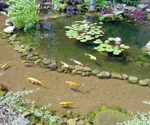 fish, aesthetic, and flowers image