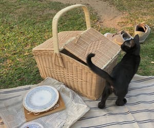 aesthetic, cat, and picnic image