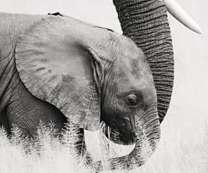 animal, white, and wild image