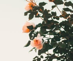 aesthetic, sunlight, and beautiful image