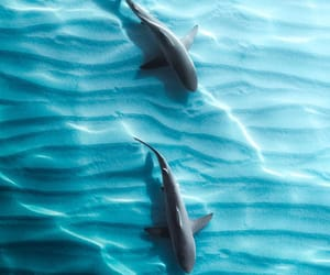 discover, fish, and nature image