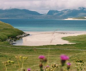 flowers, highlands, and nature image