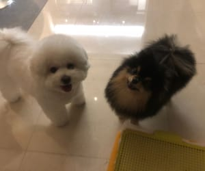 dog, bts, and yeontan image