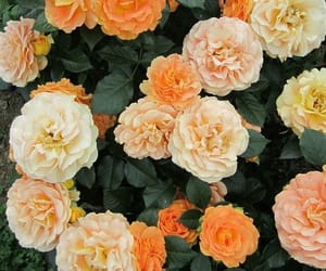 beautiful, blooming, and flowers image
