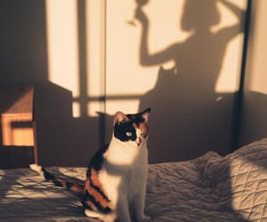 shadow and cat image