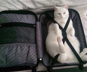 cat, animal, and travel image