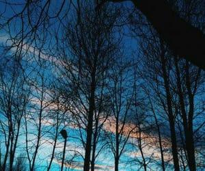 sky, tree, and blue image