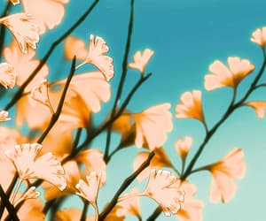 flowers, header, and scenery image