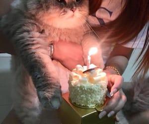 animals, cats, and happy birthday image