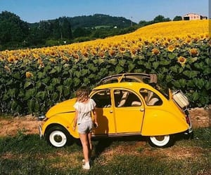 yellow, sunflower, and girl image