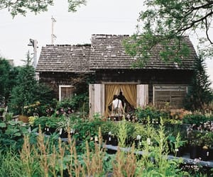 green, garden, and house image
