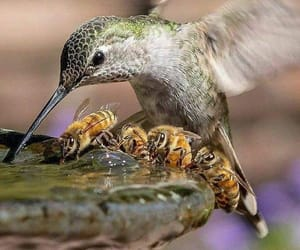 bee, animal, and bird image