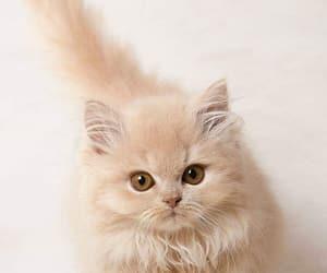 cat, beautiful, and girl image
