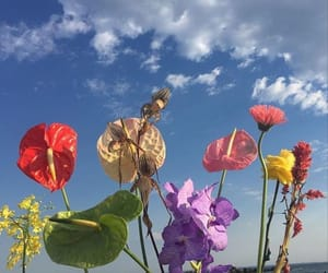 sky and flowers image