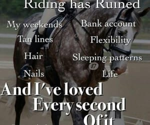 equestrian, horse, and yep image